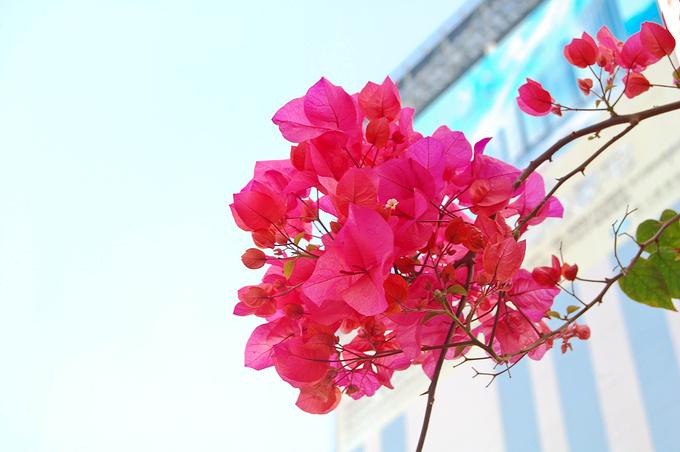 九龙公园图片