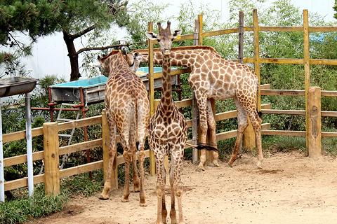 西霞口神雕山野生动物园的图片