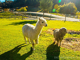 新西兰旅游景点攻略图片