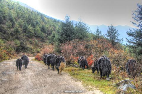 牛背山旅游景点攻略图