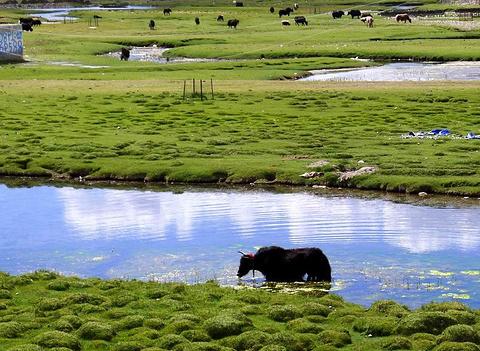 邦杰塘草原旅游景点攻略图