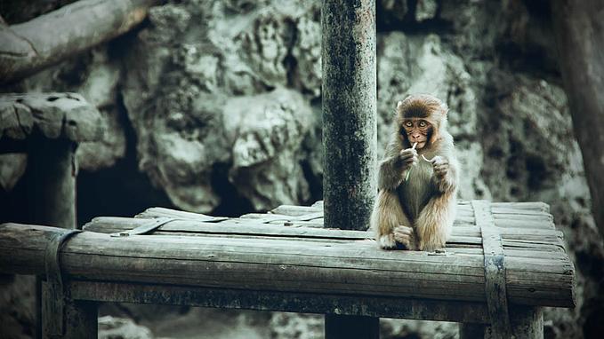 成都动物园图片