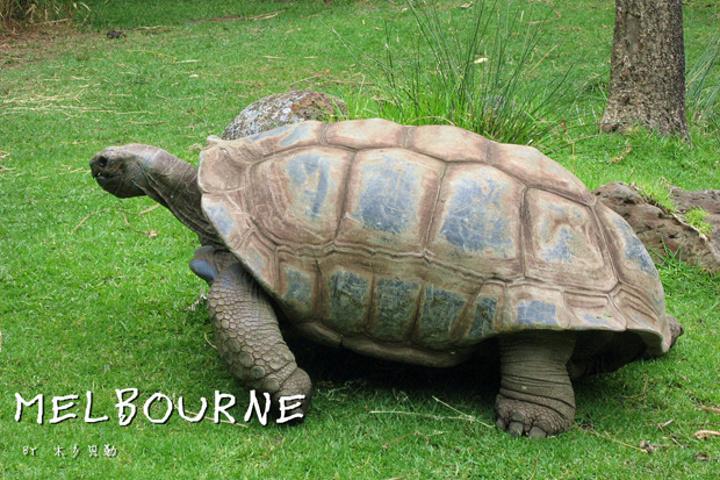 """""""时间紧想集中把澳洲动物都看了的同学,推荐..._墨尔本动物园""""的评论图片"""