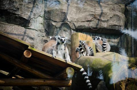 南宁市动物园的图片