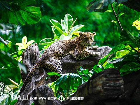 巴厘岛野生动物园旅游景点图片
