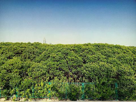红树林旅游景点图片