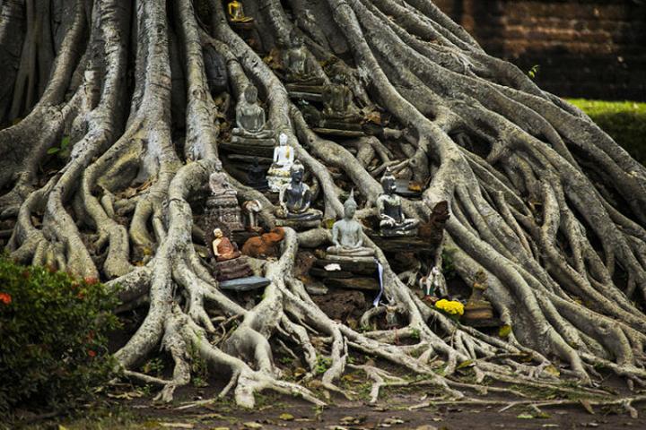 亚洲 泰国 大城府 阿瑜陀耶玛哈泰寺 - 西部落叶 - 《西部落叶》· 余文博客