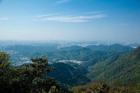 梧桐山的图片