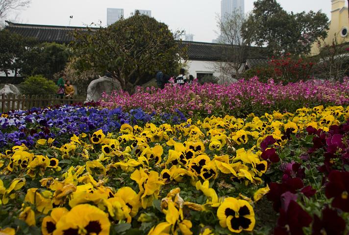 """""""总统府景区内的植物非常多,到了春季万物盛开,一朵朵花争相开放,这里也成为了植物的大观园,景区内..._南京总统府""""的评论图片"""