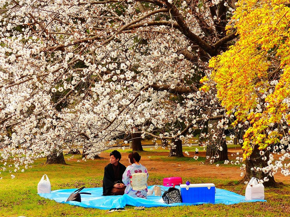 【日本】京都赏樱花品美食之旅