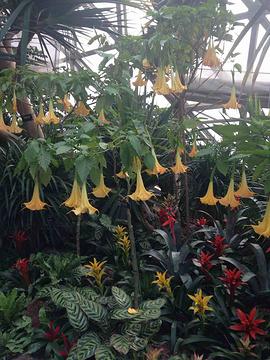 上海辰山植物园旅游景点攻略图