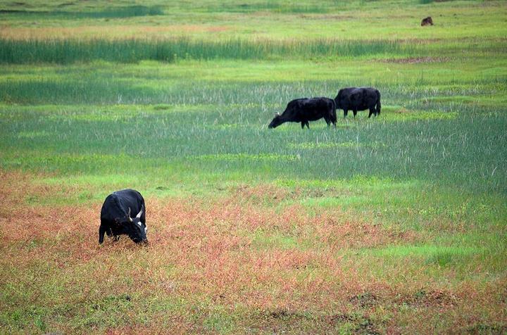 """""""  喜欢风光的,推荐十月前往,这是雨季旱季转换的季节,草原会显现出不同的色彩和层次,绝对美腻_纳帕海""""的评论图片"""