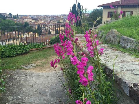 玫瑰花园旅游景点图片