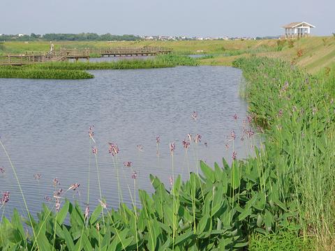 鄱阳湖国家湿地公园旅游景点图片