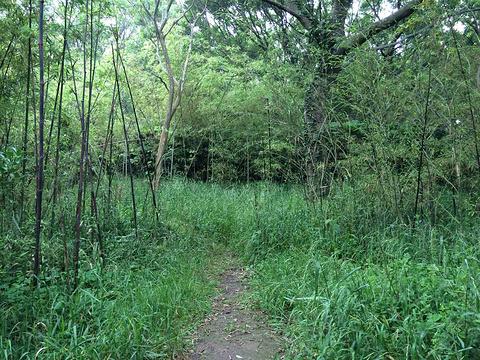 紫竹林旅游景点攻略图