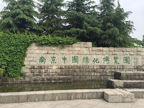 南京中国绿化博览园旅游景点图片