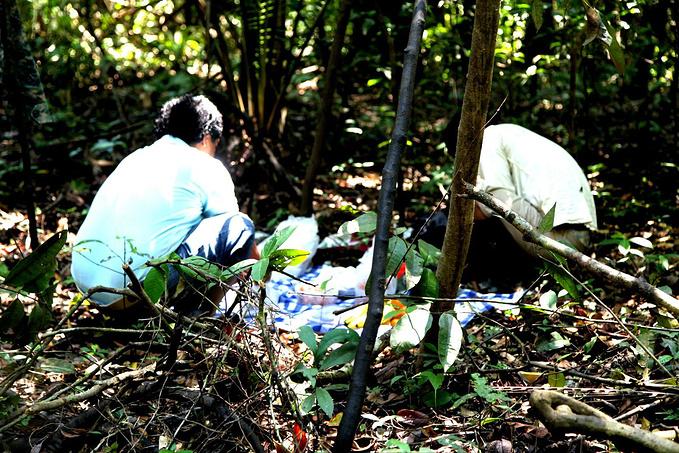 丛林午餐图片