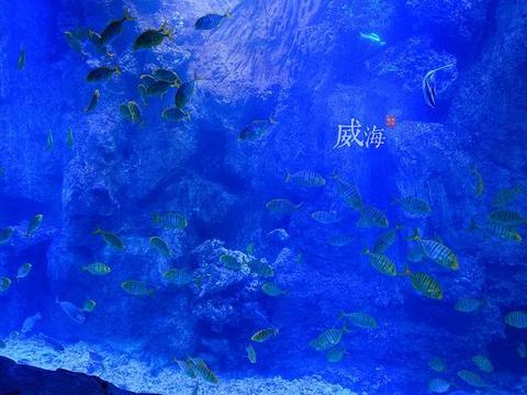 威海神游海洋世界旅游景点图片