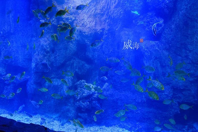 威海神游海洋世界图片