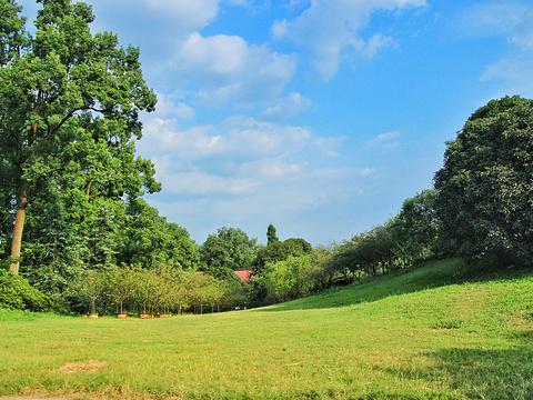 南山植物园旅游景点图片