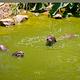 洛高宜野生动物园