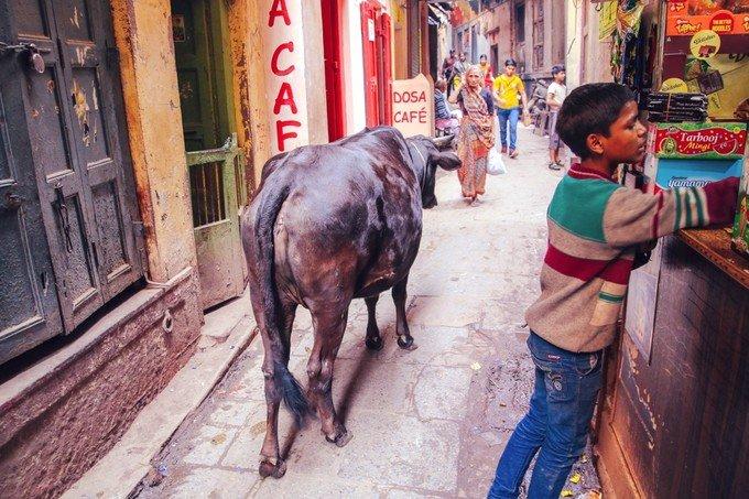穿梭于瓦拉纳西的小巷图片
