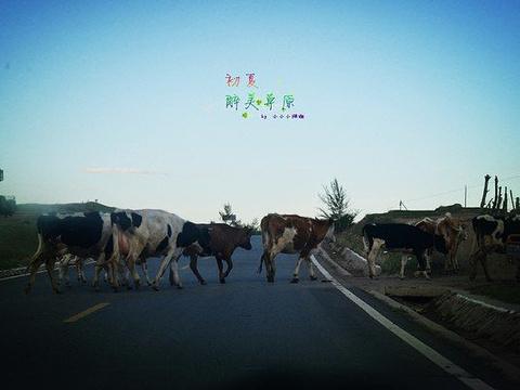 沽源坝上草原旅游景点图片