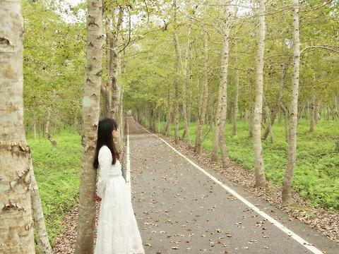 大农大富平地森林公园旅游景点图片