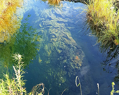 几番奔命五大连池,源于对健康的渴望。