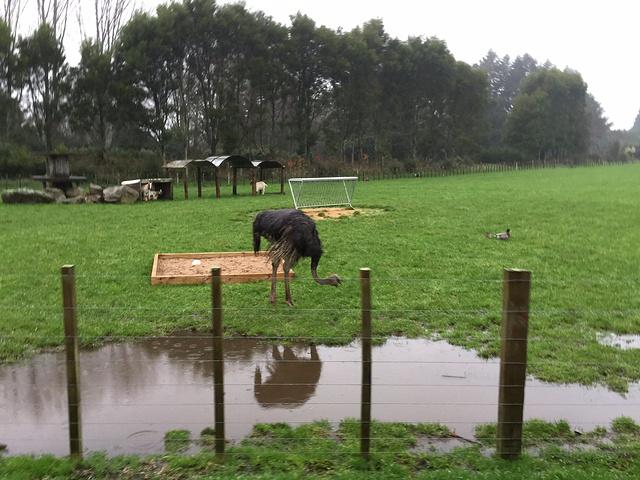 """""""很大, 动物很多的一个农场_爱歌顿牧场""""的评论图片"""