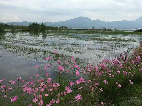 格桑花公园旅游景点图片