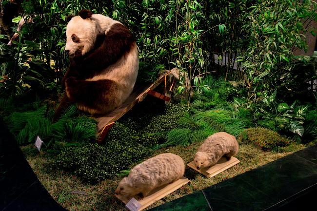 秦岭博物馆,汉中,留坝,生态农园图片