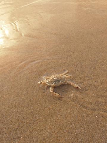 """""""却发现现实是小鱼在水底成群的调戏我们,站着不动时小鱼就围绕你对你充满好奇,你手指一动立马组团消失不见_威海国际海水浴场""""的评论图片"""