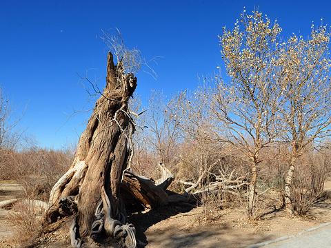 神树旅游景点图片