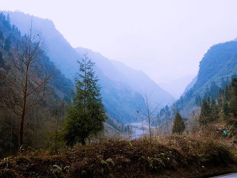 黑水河大熊猫自然保护区旅游景点图片
