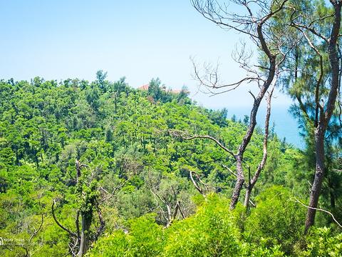 冠头岭国家森林公园旅游景点图片