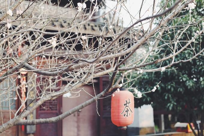 龙井山园茶文化村图片