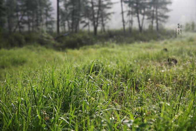 伊克萨玛国家森林公园图片