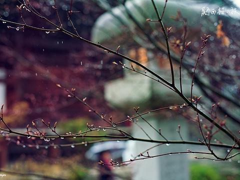 清凉寺旅游景点图片