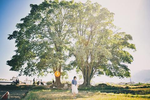 夫妻树旅游景点攻略图