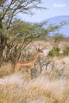 桑布鲁野生动物保护区