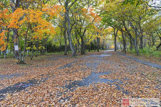 青叶公园图片