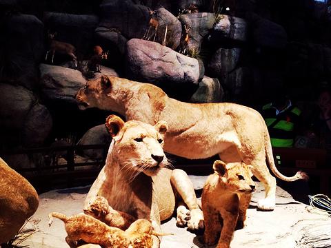 上海自然博物馆旅游景点图片