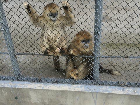 北方森林动物园旅游景点图片