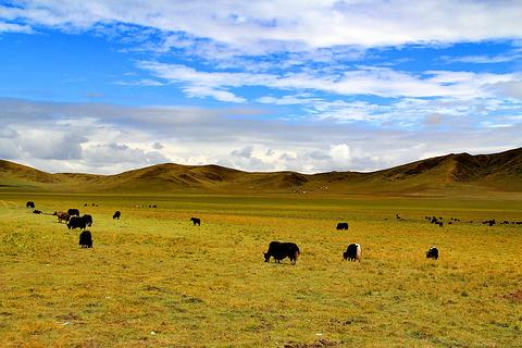 红原—若尔盖大草原