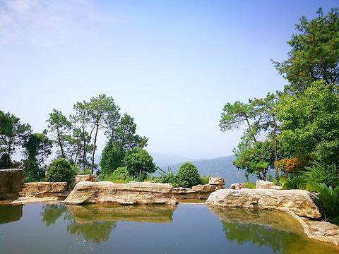 铁山坪森林公园旅游景点图片