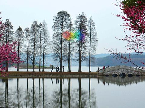 东湖梅园旅游景点图片