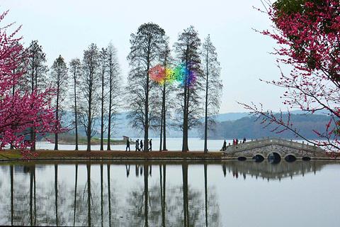 东湖梅园的图片