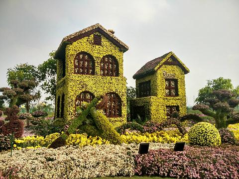 小榄菊花会旅游景点图片