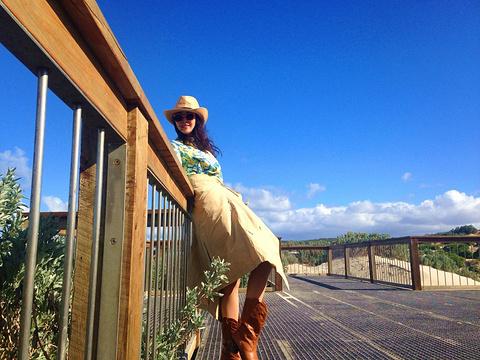海狮湾保育公园
